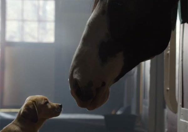 Budweiser Puppy Love NFL Super Bowl XLVIII Video Commercial